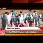 Смехотворная встреча Эрдогана и турецкие пингвины