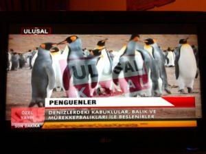 """Турецкие пингвины - символ предательства Улусал-канал в прайм-тайм: """"Пингвины питаются моллюсками, рыбой и кальмарами..."""""""