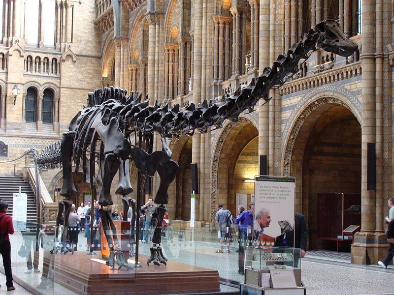 Музей естественной истории Лондон забастовка