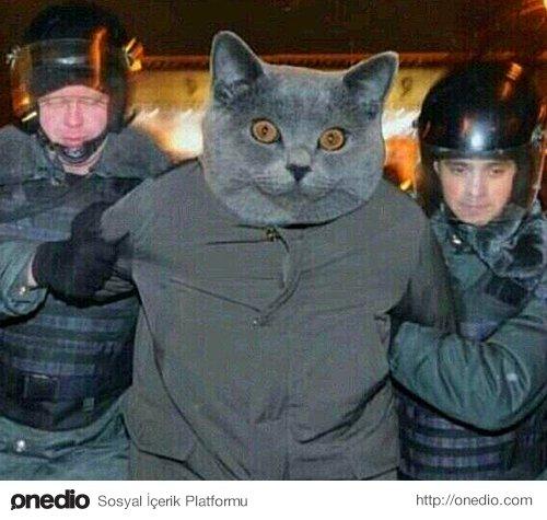Коты-вредители2