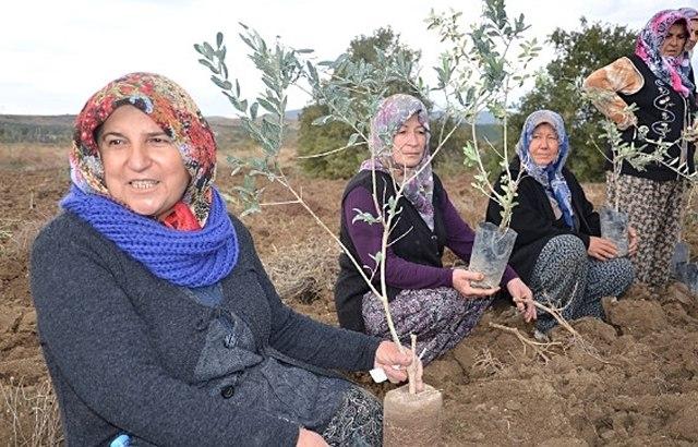 Женщины Сомы сажают новые оливковые деревья